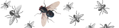 Flies_banner_preview