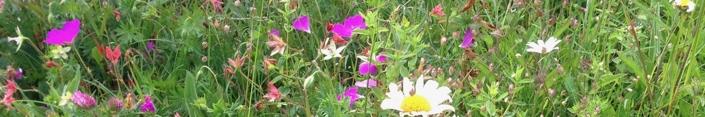 Wildflowers_slimwindow_preview