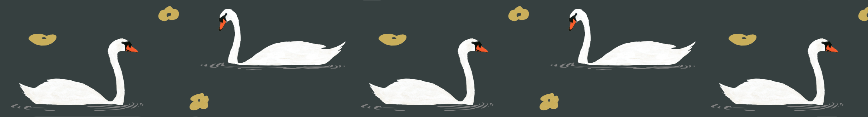 White_swans_for_sf_preview
