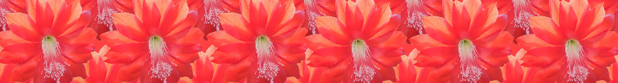 Banner_cactus_preview