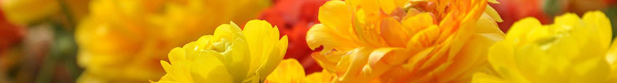 Flowers_spoonflower_868x117_preview