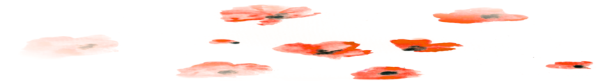 Poppies_fade_preview