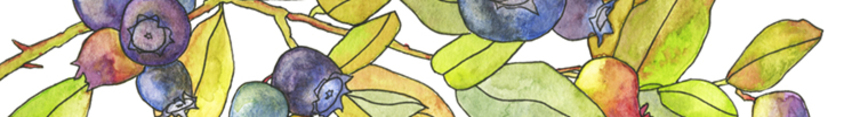 Banner_web_blueberry_etsy_preview