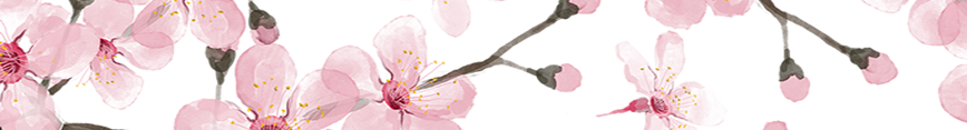 Cherry_blossom_fabric_cherryblossom_decor_at_spoonflower_by_magenta_rose_designs_preview
