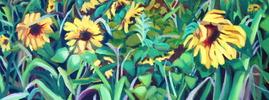 Sunflower_field_2_preview