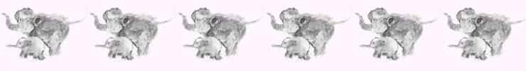 Elephantbanner_preview