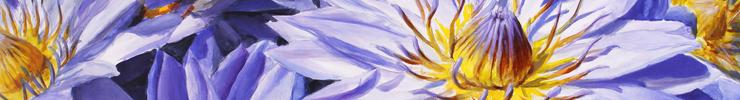 Lotus-light-spoon-flower-header_preview