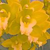 Yellow_flower_fab_preview