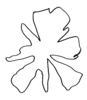 Paper_flower_form_templete_preview